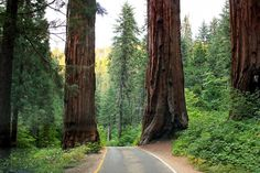 13. Sequoia and Kings Canyon National Parks, California  #camping #hiking #parks http://greatist.com/fitness/best-camping-united-states