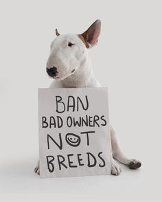 bull terriers are banned in puerto rico, venezuela, germany, denmark, finland, spain, ireland, switzerland, israel, bermuda islands, ukraine, belarus and now canada is discussing the ban too. unless the fuckin bad owners go to jail, this kind of...