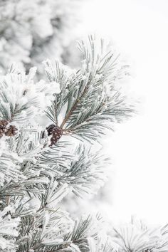 20 new Ideas for christmas tree photography nature forests Winter Background, Christmas Background, Christmas Wallpaper, Christmas Tree Photography, Winter Photography, Ocean Photography, Photography Tips, Wedding Photography, Winter Szenen