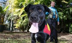 Smiley Black Lab Becomes First Canine Archaeologist