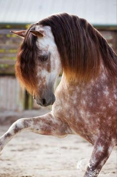 magnificence レ le cheval the horse equus nature animale sauvage wild pracht ence le cheval das pferd equus nature animale sauvage wild Horse Age, Horse Girl, Horse Horse, The Horse, Horse Head, Horse Stalls, Horse Barns, Most Beautiful Horses, All The Pretty Horses