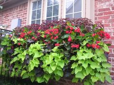 Signature Gardens: CONTAINERS/ANNUALS - Spring/Summer- Great lists with pictures for sun and part sun and shade!
