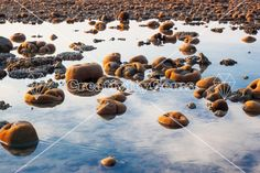 Exposed coral reef at low tide in water