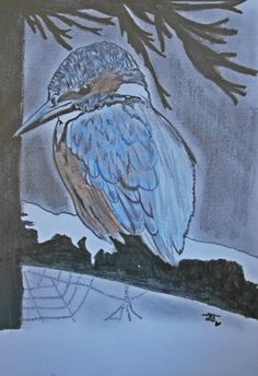 Portrait: Kingfisher Approx. time: 5 hours Used materials: 1B, 5B & 8B pencils + pastels