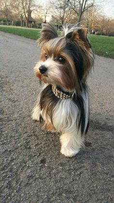 Cute dog looking adorable with it's accessory.