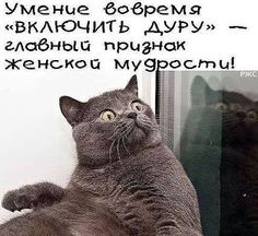амина амина – Google+ Funny Cute, Humour, Man Humor, Russian Jokes, Funny Expressions, Funny Phrases, Something Interesting, Good Mood, Positive Thoughts
