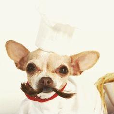 Ya regresamos de vacaciones y estamos listos para recibir pedidos de tortas de cumpleaños!  Contactanos por whatsapp al (319) 447-1691 para más información  #PerroFeliz #chachayelgalgo #pasteleriacanina #paletasparaperros #amorperruno #mascotas #peluditos #alimentacioncanina #tortasparaperros #cumpleañosperruno #cumpleañosparaperros #YoCreoEnCali #cali #calico #colombia #chihuahua #chihuahuachef