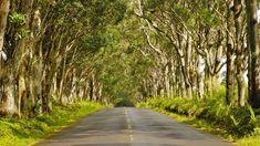 Your Hawaiian Vacation: The Best Places to Go on Every Island Hawaii Tours, Aloha Hawaii, Hawaii Travel, Places To Travel, Places To Go, Tree Tunnel, Waimea Canyon, Travel Activities, The Good Place