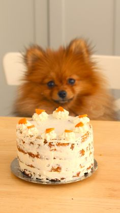 Recipe with video instructions: Join Paddington as he whips up an easy, delicious and dog-friendly treat. Ingredients: 1 cup grated carrots (approx. 1 large carrot), 1 large egg, ½ cup canned sardines, drained and shredded, ¼ cup sunflower seed oil, ¼ cup water, 1 cup whole wheat flour, cooking spray, 1 ½ cups cream cheese, room temperature, sliced carrot