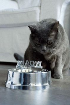Cat Bowl Miaow