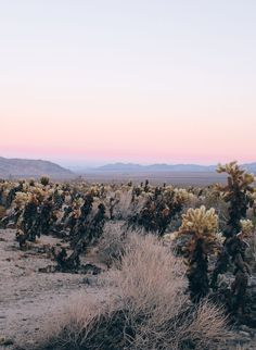 A Well-Designed Day in Joshua Tree, California