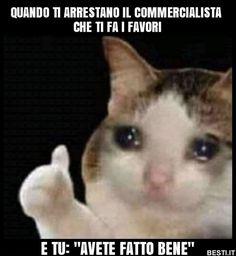 Sad Cat Meme, Cute Cat Memes, Cute Animal Memes, Cute Love Memes, Funny Animal Pictures, Funny Animals, Cute Animals, Funny Memes, Stupid Memes