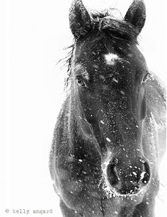 Horse Photograph - black and white horse photography - 8x10 black horse photo, winter horse, snow ice landscape. via Etsy.