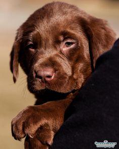 New Puppy by melissa@monkeybrainphotography