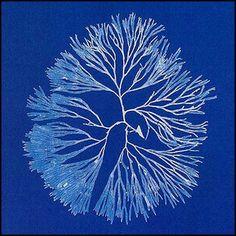Anna Atkins - Photographs of British Algae: Cyanotype Impressions