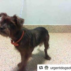 Images at Miami Dade Animal Services Pet Adoption and Protection Center on instagram