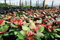 green plants, greenhouse