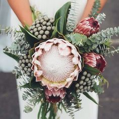 King protea bouquet love the colors, clear, simple, green, straight