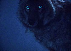 """Which """"Teen Wolf"""" Creature Are You"""