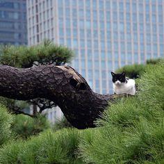 Angry cat ^^ #japan #japonia #tokio #tokyo #konnichiwapl #konnichiwa #garden #cat #tree #instajapan #hamarikyu