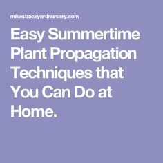 Easy Summertime Plant Propagation Techniques that You Can Do at Home.