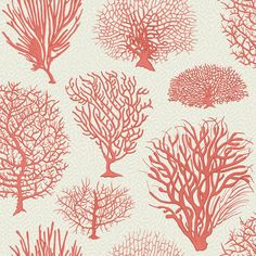 Buy Cole & Son 107/2011 Seafern Wallpaper | Curio | Fashion Interiors