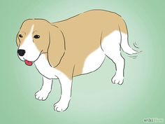 The best way to make sure that your dog is okay after giving birth is to learn more about what typical canine whelping is like. Remember, dogs have been giving birth for thousands of years. It is a natural process, but there are things you...