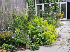 Ga voor wild en laat je tuin leven! – Carla Wilhelm Eco Garden, Love Garden, Dream Garden, Home And Garden, Front Gardens, Small Gardens, Outdoor Gardens, Pergola Patio, Backyard Patio
