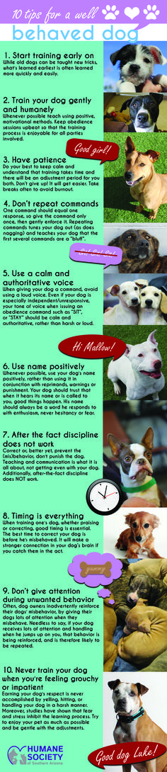 Humane Society of Southern Arizona has put together a list of tips for training your dog! We hope this is helpful with the furry ones in your life.