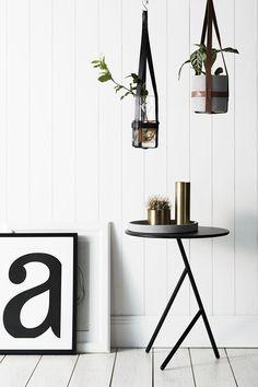 APARTMENT   Hanging plants
