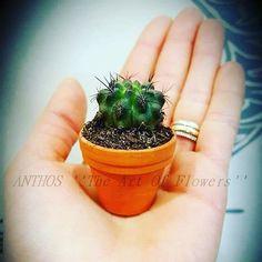 Cactus, Succulents, Planter Pots, Succulent Plants
