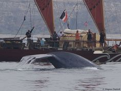 Blue whale inches away from our Vaka, our amazing is this!!