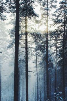 Winter   by: {anastasiaf }