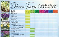 17 besten summer flowering bulbs bilder auf pinterest. Black Bedroom Furniture Sets. Home Design Ideas