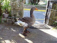 просто животные– #Птицы– Сообщество– Google+