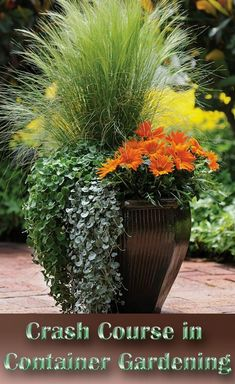 The first step to successful container gardening is to uncover the mystery surrounding the pots and containers you'll have to choose from... #ContainerGardening