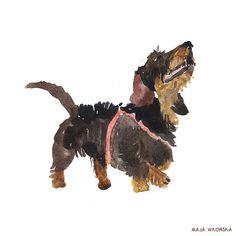 Watercolor dachshund