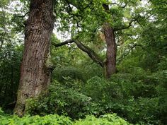 Trees, Plants, Tree Structure, Plant, Wood, Planets