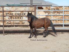 PM Star Creek #1483 Fish Creek 3-Strike Sale