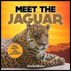 Meet The Jaguar: Fun Facts & Cool Pictures (Meet The Cats) Price:$12.99