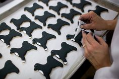 White House pastry chefs decorate cookies shaped like Bo, the Obama Family Dog, for holiday receptions at the White House, Dec. 8, 2010.