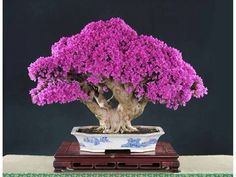 Tiny Bonsai... Marvelous :) http://vsinetwork.co/id/bundaannisa/