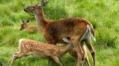 Eläinten esiinmarssi esittelee Pohjolan eläimiä korennoista karhuihin ja majavasta muurahaisiin.