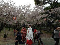 三柱神社・流鏑馬。Mihashira-jinja,Yabusame. Yanagawa,Fukuoka. https://sites.google.com/site/yabunavi/home/list1/mihashira