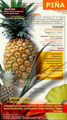 Infografía. Propiedades y beneficiios de la piña. Resumen de las características generales de la planta de la Piña. Propiedades, beneficios y usos medicinales más comunes.