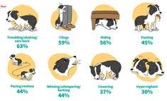 New dog druf released for dogs with noise phobia by Zoetis called Sileo: Signs of dog anxiety