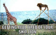 Hey giraffe, wait up!