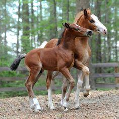 playful foals