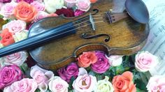 Violin and Flowers – Saturday's Jigsaw Puzzle
