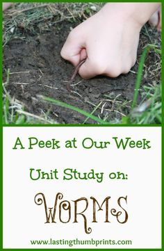 Letter W.w is for worms! Worm Unit Study - Take a peek at our week with earthworms! Montessori Science, Preschool Science, Science For Kids, Science Activities, Summer Science, Nature Activities, Science Fun, Science Projects, Science Nature